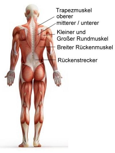Rückentraining für einen breiten massiven Rücken